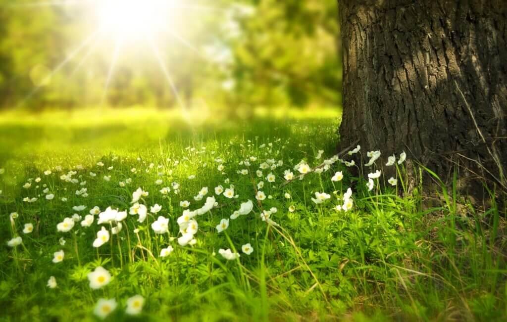 Frühjahrsputz - Zeit zum Ausmisten