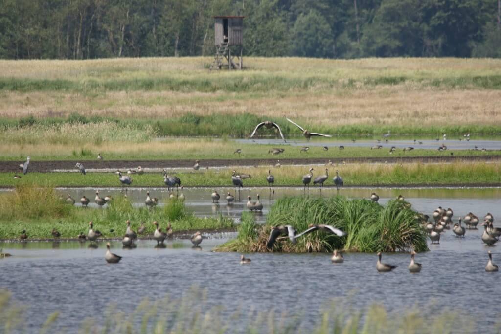 Challenge für den Klimaschutz - Beitragsbild Moor/Vögel