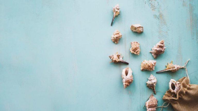 Mit einem guten Buch auf Reisen - Blau mit Muscheln
